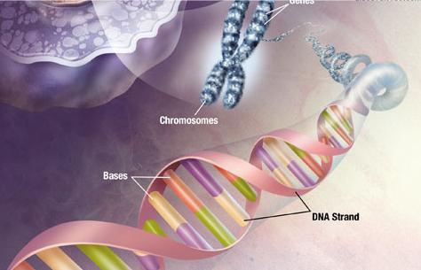 基因工程翻译案例