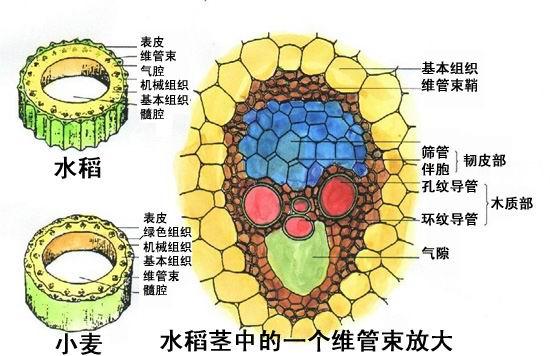 生物科技翻译案例