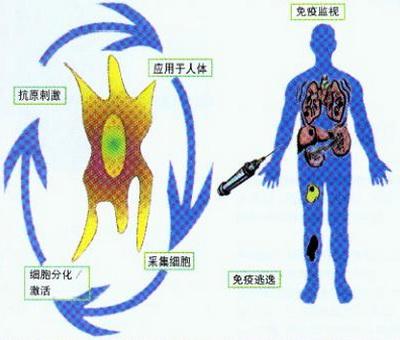 生物治疗翻译案例