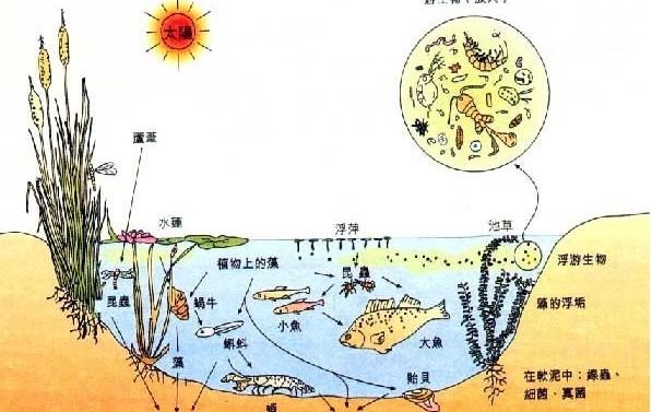 生态学翻译案例
